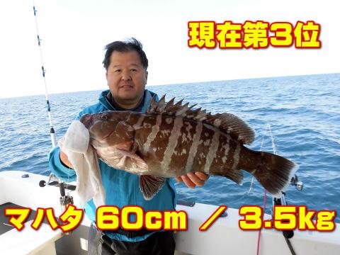 現在第3位       マハタ 60cm / 3.5kg