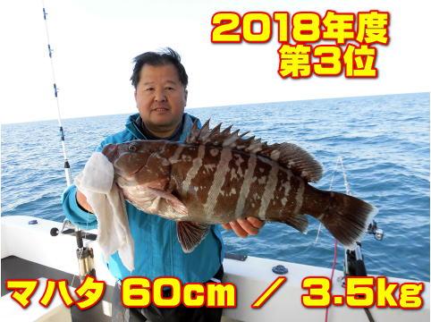 2018年度          第3位       マハタ 60cm / 3.5kg