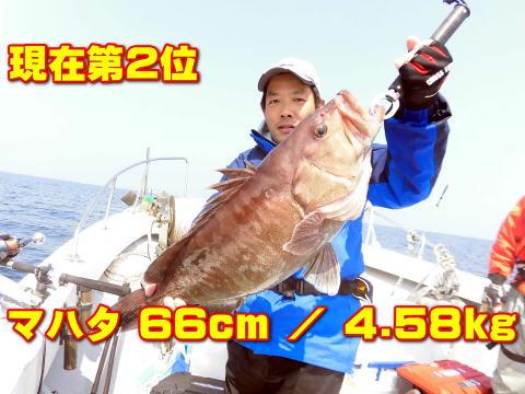 現在第2位       マハタ 66cm / 4.58kg