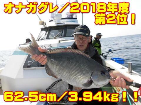 オナガグレ/2018年度         第2位!       62.5cm/3.94kg!!