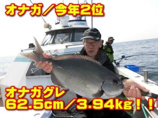 オナガ/今年2位       オナガグレ 62.5cm/3.94kg!!