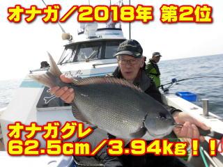 オナガ/2018年 第2位       オナガグレ 62.5cm/3.94kg!!
