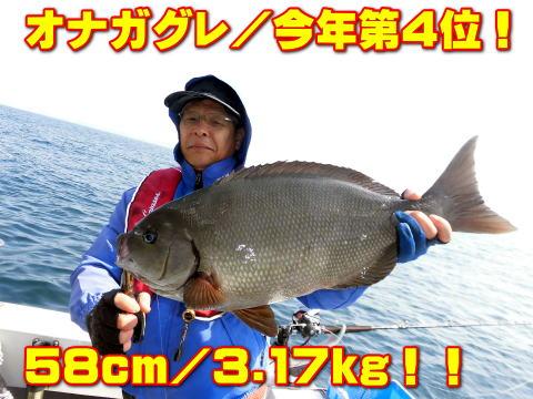 オナガグレ/今年第4位!        58cm/3.17kg!!