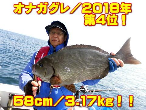 オナガグレ/2018年       第4位!       58cm/3.17kg!!