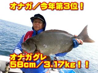 オナガ/今年第3位!       オナガグレ 58cm/3.17kg!!