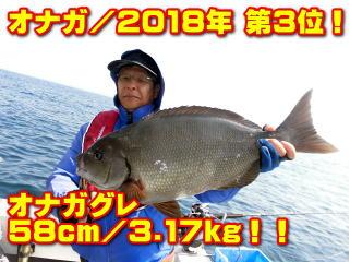 オナガ/2018年 第3位!       オナガグレ 58cm/3.17kg!!