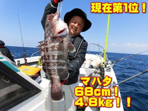 現在第1位!              マハタ        68cm!         4.8kg!!