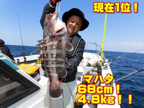 現在1位!              マハタ        68cm!         4.8kg!!