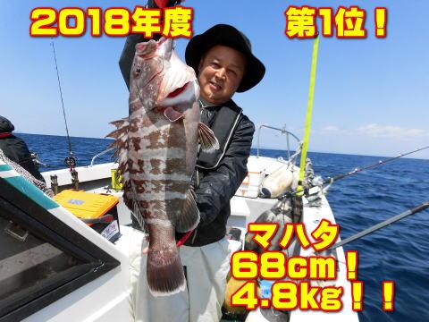 2018年度   第1位!              マハタ        68cm!         4.8kg!!