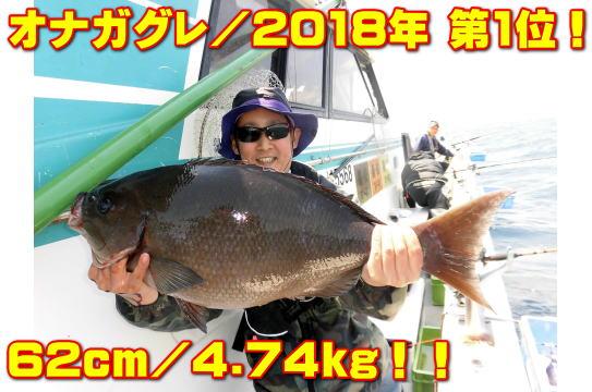 オナガグレ/2018年 第1位!        62cm/4.74kg!!