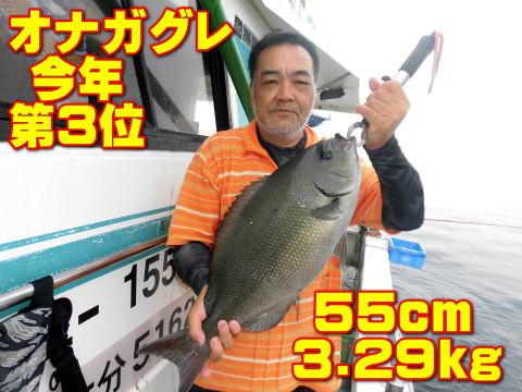 オナガグレ  今年 第3位           55cm       3.29kg