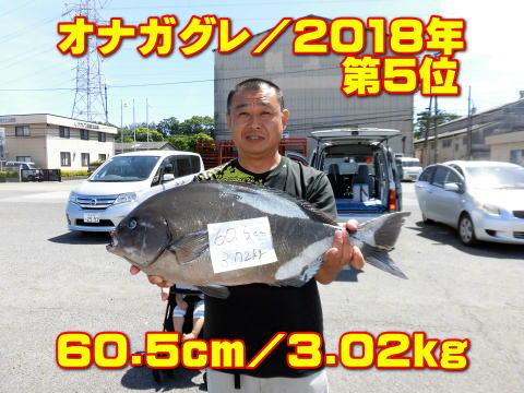 オナガグレ/2018年        第5位       60.5cm/3.02kg
